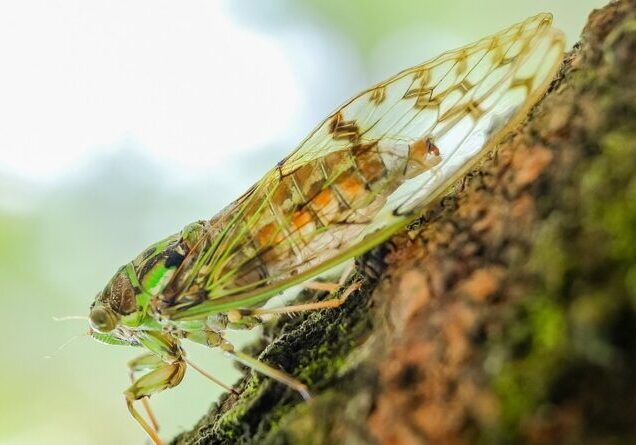 cicada-908128_960_720