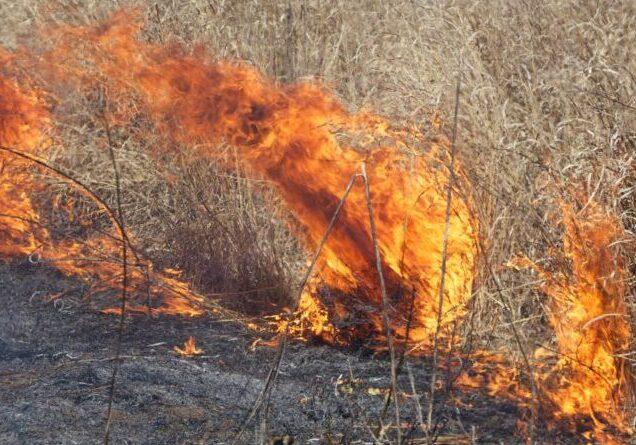 big fire burning field grass