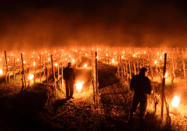 fik wijngaard