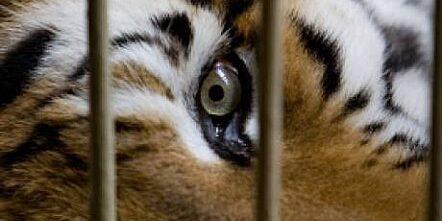 maltraitance-et-cruaute-envers-les-animaux-dans-plusieurs-z