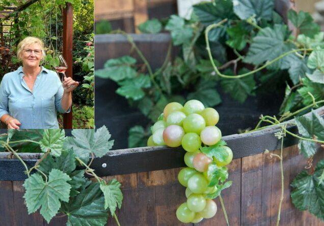 margot wijnproeven