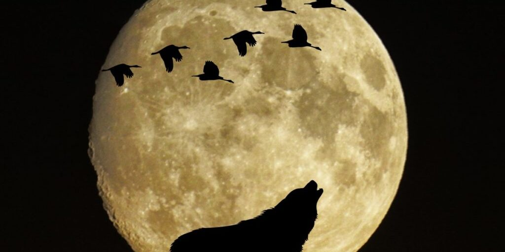 mystical_moon_full_moon_birds_wolf_moonlight-1185112.jpg!d