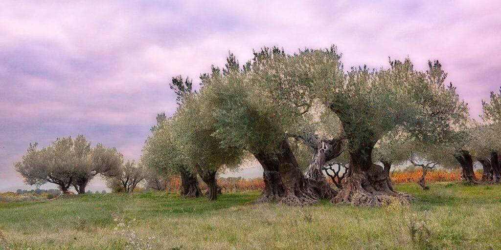 olivier-1150602_1280