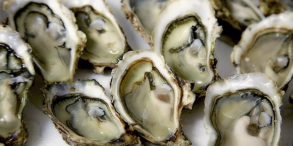 oyster-1522835_960_720