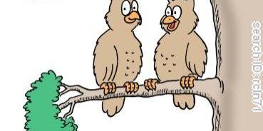 Vreemde vogels