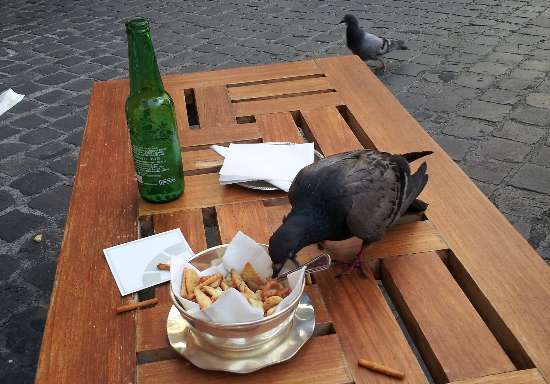 rome duif