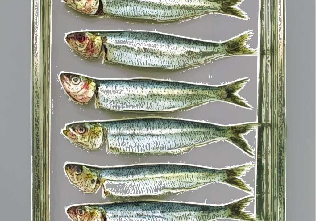 sardines-in-a-can-pop-art2