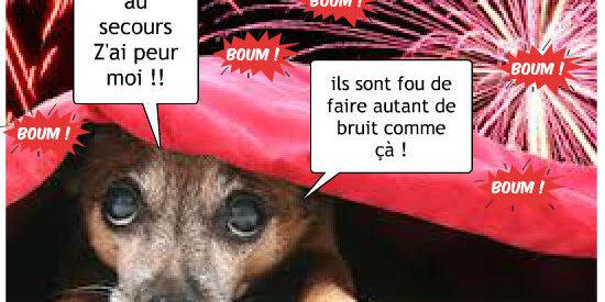 z-aime-pas-le-feu-d-artifice-51695